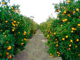 asesoramiento técnico agrícola