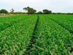 planificacion seguimiento evolucion cultivos